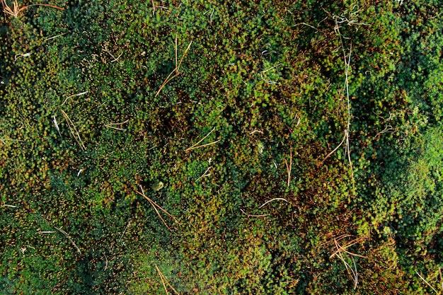 Muschio verde sul terreno, trama di terra muscosa.