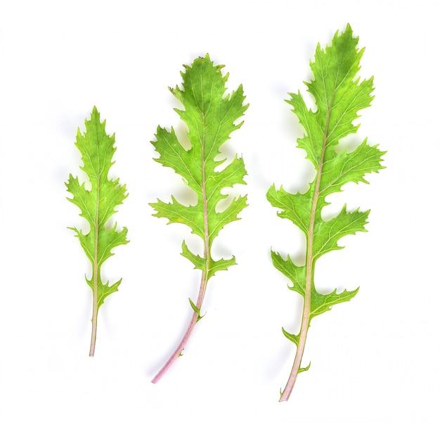 Myrobalans chebulic, legno di myrolan (terminalia chebula retz.) frutta, proprietà medicinali.