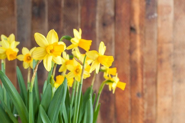 Narcisi gialli di pasqua soleggiata della primavera su fondo di legno rustico con lo spazio della copia.