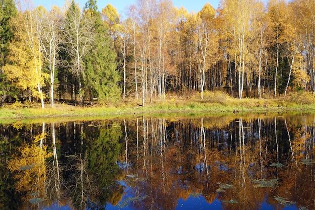 Natura autunnale alberi con foglie gialle si riflettono nel fiume.