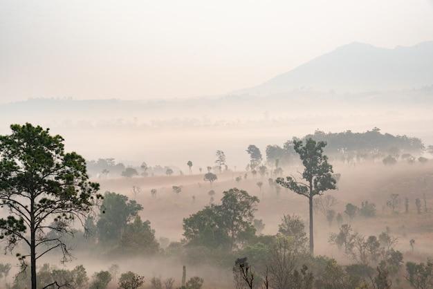 Natura con foresta nebbiosa