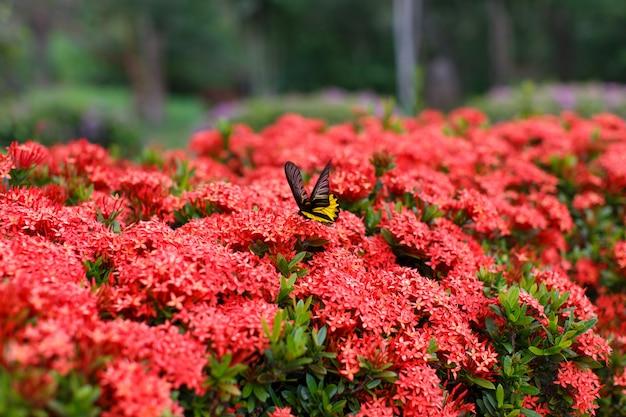Natura del dettaglio delle farfalle dei fiori
