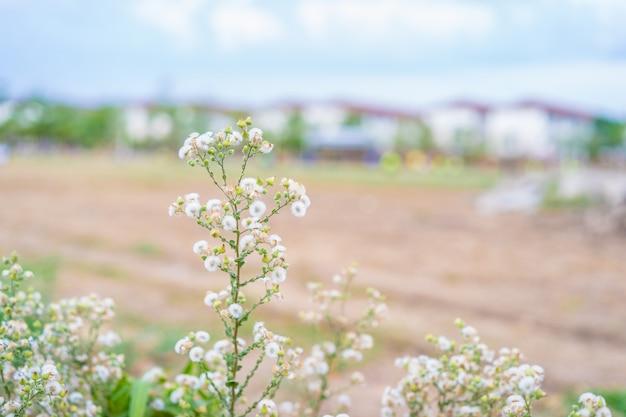 Natura del fiore dell'erba della primavera