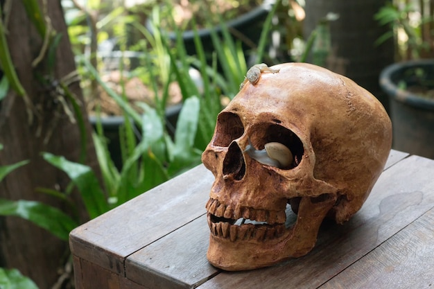 Natura morta del cranio umano, concetto di halloween, stile di natura morta del cranio di fine di fine