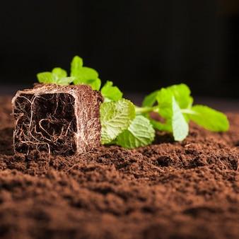 Natura morta di piante sul terreno