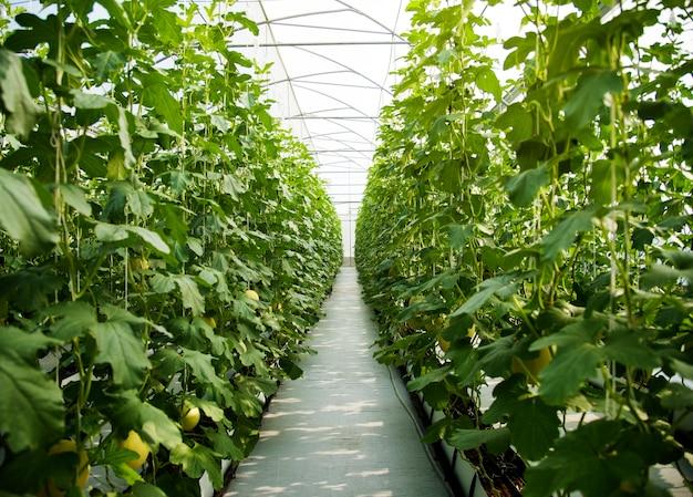 Natura verde degli alberi delle piante fertili della zucca
