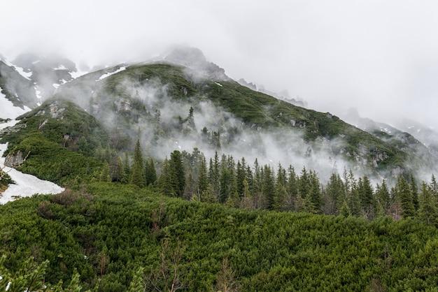 Nebbia ai piedi delle montagne con foresta verde