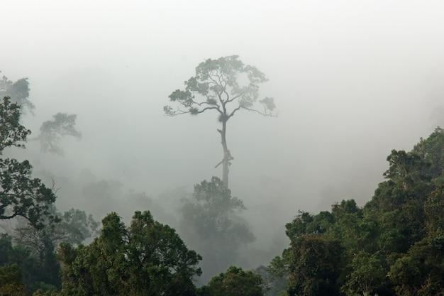 Nebbia mattutina nella fitta foresta pluviale tropicale