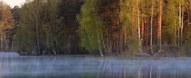 Nebbia sul lago al mattino presto all'alba nella foresta. panorama della riva con alberi, paesaggio estivo