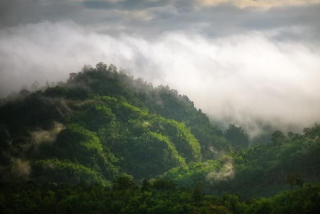 Nebbia sulla foresta e sulle montagne