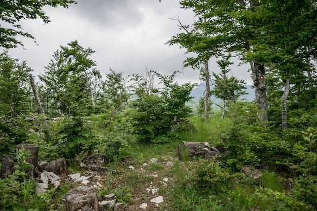 Nella foresta ci sono segni per i turisti, in modo che non vacillino.