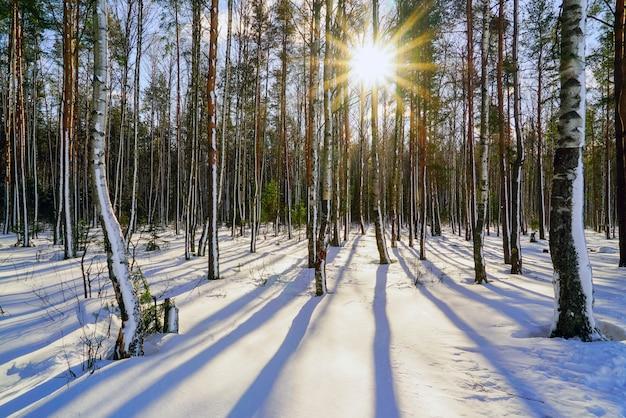 Nella foresta invernale con alberi coperti di neve in una luminosa giornata di sole
