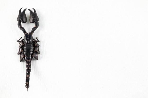 Nero scorpione