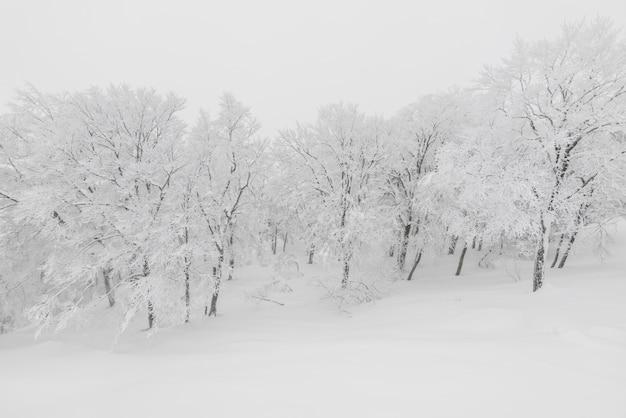 Neve bellezza bel tempo all'aperto