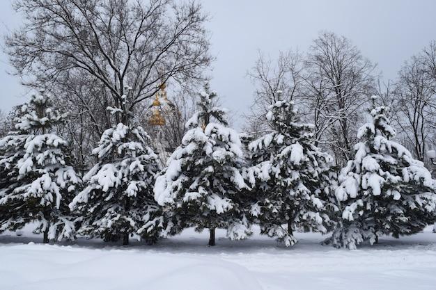 Neve di caduta degli alberi degli alberi di natale del parco del parco innevati
