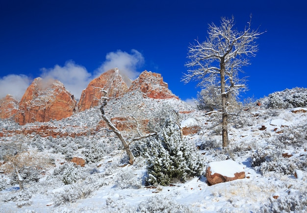 Neve invernale nel deserto zion national park