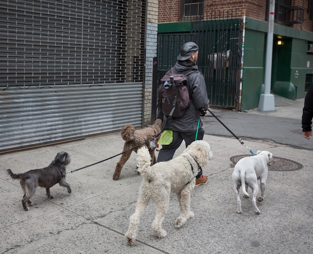 New york, usa - 2 maggio 2016: new york city dog walker a manhattan. animali e loro padroni per le strade della grande città. i cani per le strade di new york.