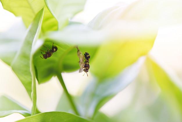 Nido di vespe sulla natura dell'albero o nido di vespe sulle foglie - insetti selvatici