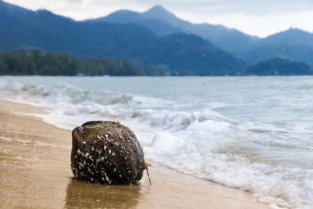 Noce di cocco, ricoperta di conchiglie, gettata sulla riva sabbiosa ondeggia contro le montagne