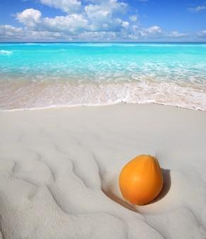 Noce di cocco sulla sabbia bianca caraibica della spiaggia matura