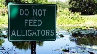 Non alimentare gli alligatori