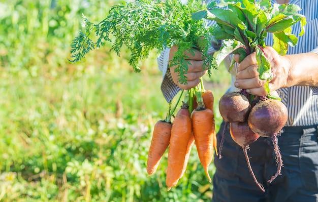 Nonna con verdure in mano nel giardino. verdure biologiche.