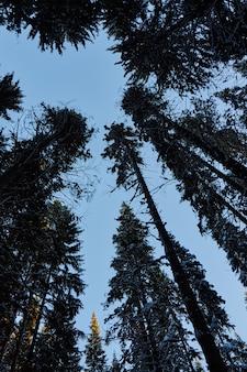 Notte in una foresta oscura, una passeggiata nei boschi prima di natale.