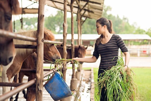 Nutrire i pony