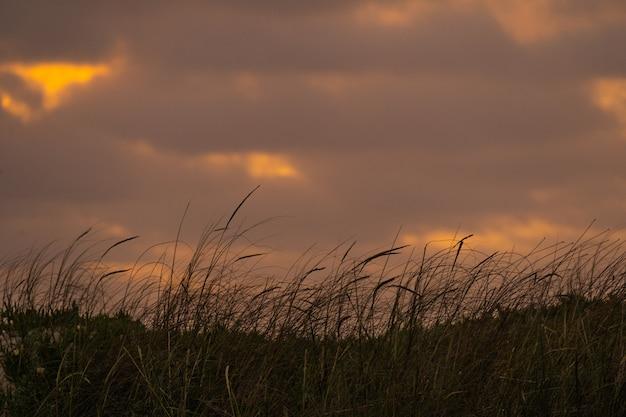 Nuvole al tramonto su un campo ventoso