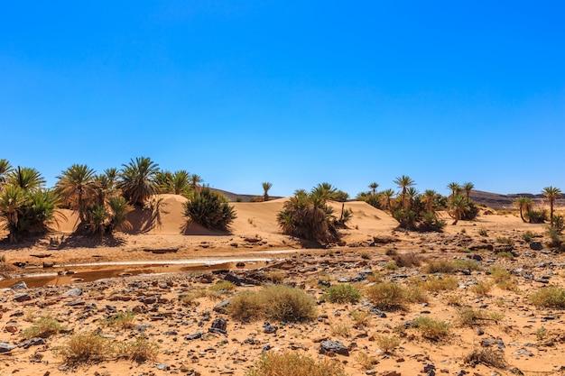 Oasi nel deserto del sahara