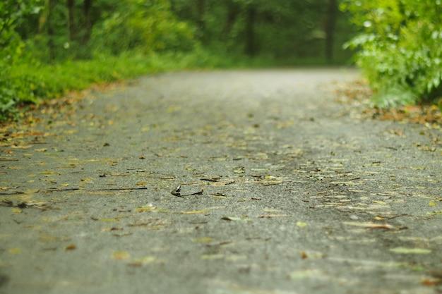 Obiettivo di costruire un percorso di marcia