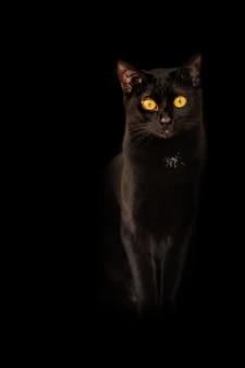 Occhi della fiamma di giallo del gatto nero del fondo su fondo nero