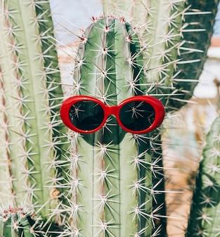 Occhiali da sole su cactus. concetto di vacanza nei paesi caldi