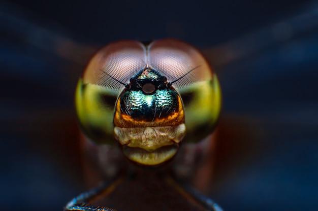 Occhio del colpo a macroistruzione estreme della libellula in selvaggio.