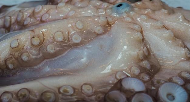 Octopus tentacoli