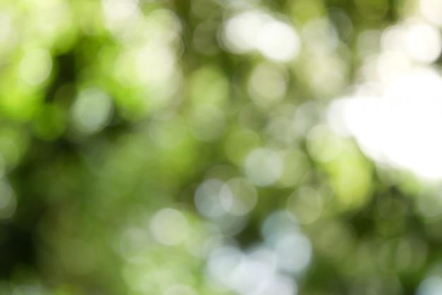 Offuscata natura sfondo verde, sfocatura parco con luce bokeh, natura, giardino, primavera e stagione estiva