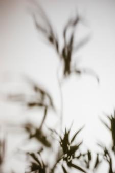 Offuscata ombra di foglie su sfondo bianco
