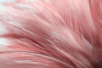 Offuschi la struttura della piuma degli uccelli e dei polli per fondo, colore rosso di progettazione di arte.