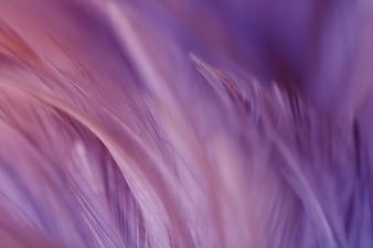 Offuschi la struttura della piuma dei polli per fondo, fantasia, colore astratto e morbido di progettazione di arte.