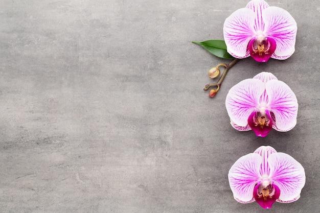 Oggetti di tema dell'orchidea della stazione termale su fondo grigio.