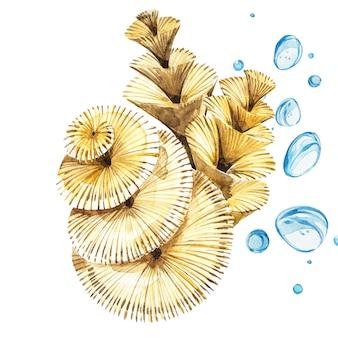 Oggetto di vita di mare dell'alga isolato su priorità bassa bianca. illustrazione dipinta disegnata a mano dell'acquerello