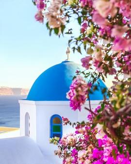 Oia, tradizionale villaggio greco di santorini con cupola blu di chiese con fiori viola, grecia.