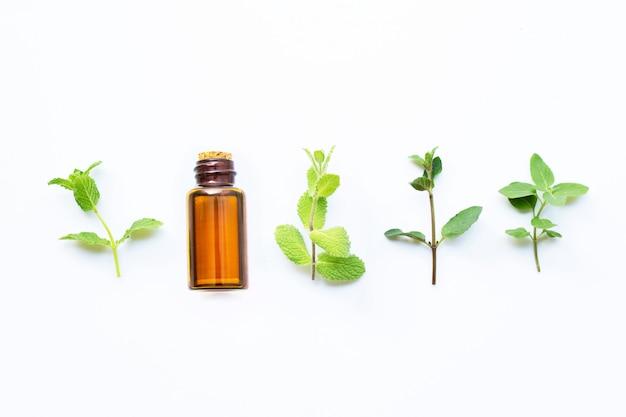 Olio essenziale con diversi tipi di menta su bianco