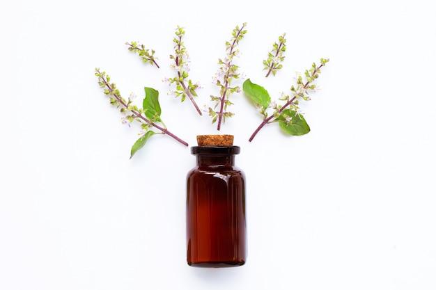 Olio essenziale del basilico santo con le foglie e fiore santi del basilico su bianco