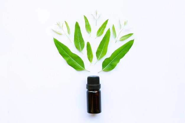 Olio essenziale di eucalipto su bianco