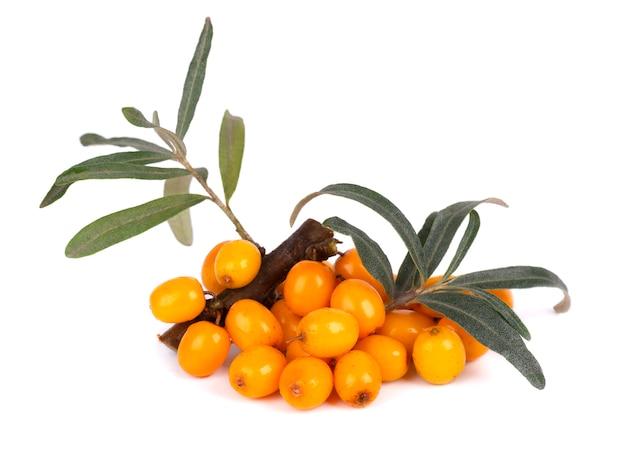 Olivello spinoso. bacche mature fresche con le foglie isolate su bianco