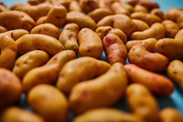 Ollucos andino carote servite in tavola
