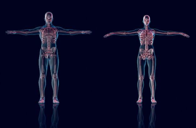 Ologramma uomo, ologramma anatomia femminile e scheletro, rendering 3d