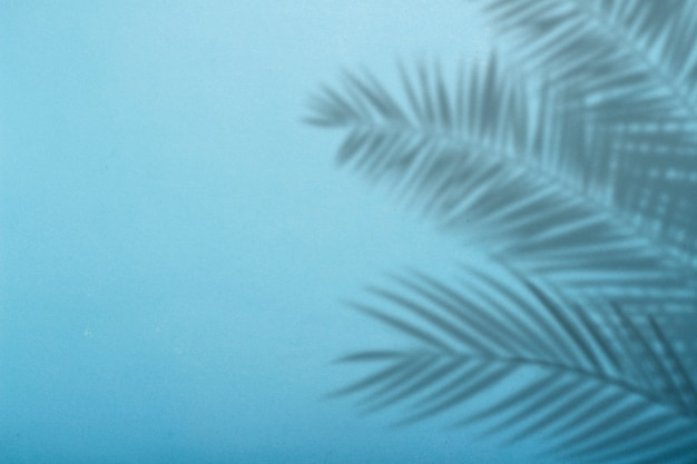 Ombra dalle foglie di palma su uno sfondo di parete blu. sfondo blu, cartone. immagine astratta
