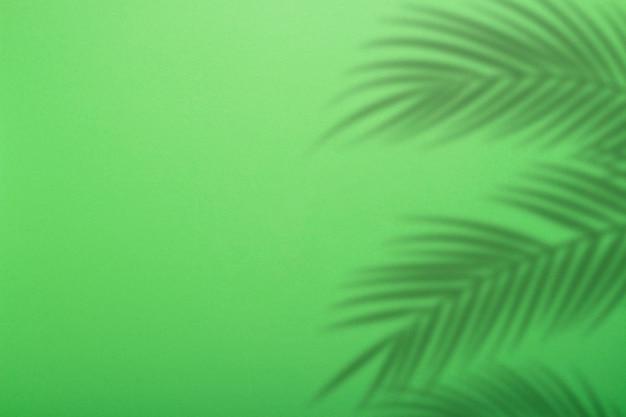 Ombra dalle foglie di palma su uno sfondo di parete verde. sfondo verde, cartone. immagine astratta. concetto tropicale
